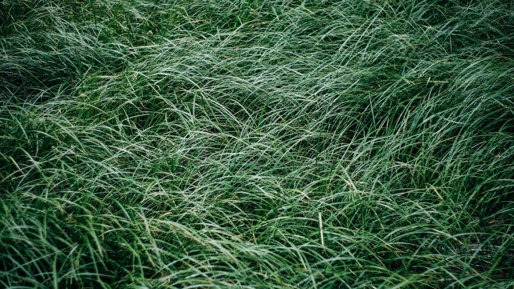 best fertilizer for bermuda grass