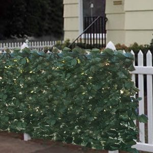Best Choice Products Best Hedge Plant