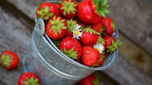 Best Fertilizer for Strawberry