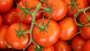 Best Organic Fertilizer For Tomato