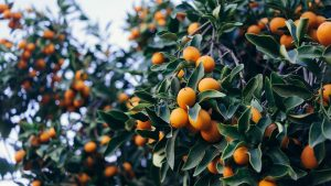 best fertilizers for fruit trees