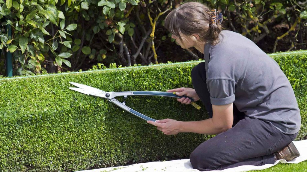 best hedge shears