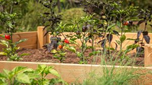 best soil for vegetable garden in a raised bed