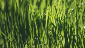 Best Fertilizers For Zoysia Grass