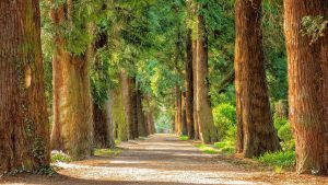best fertilizers for trees and shrubs