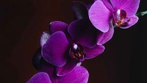 best orchid fertilizers