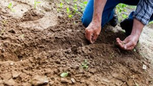 best top soils