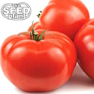 Beefsteak Tomato Best Vegetable To Grow In Container