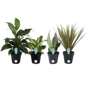 Costa Farms Live House Plant Collection
