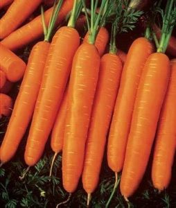 Jaysseeds Heirloom Scarlet Nantes Carrot