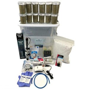 Virgenu Best Mushroom Growing Kit